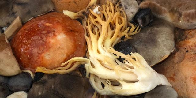 Как отварить грибы?