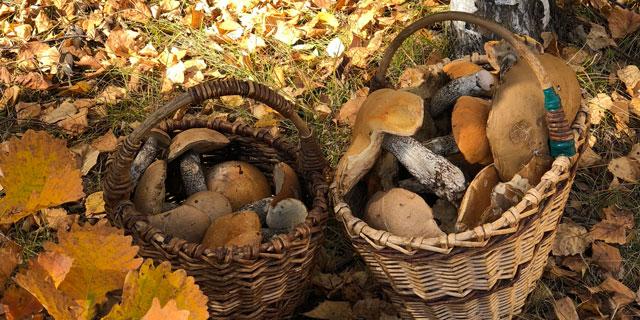 Последний слой грибов