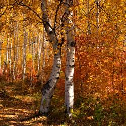 Золотая осень Хабаровский край