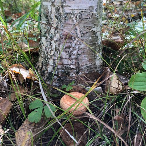 Затянулись дожди - грибов не жди
