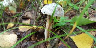 Затянулись дожди — грибов не жди