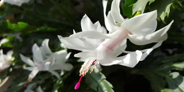 У каждого цветка свой аромат