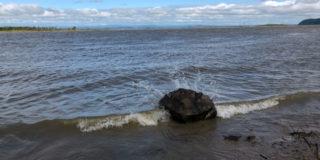Карповые бассейна р. Амур — новый список