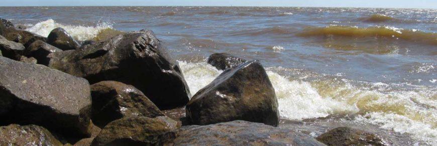 Список рыб бассейна реки Амур (обновляемый)