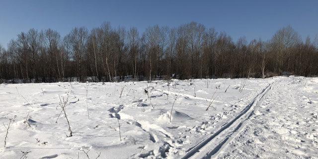 Зима в Силинском лесу