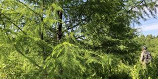 «Силинский лес» в Силинской лесопарковой зоне г. Комсомольска-на-Амуре