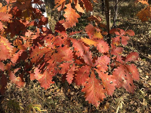 Силинский лес осенью
