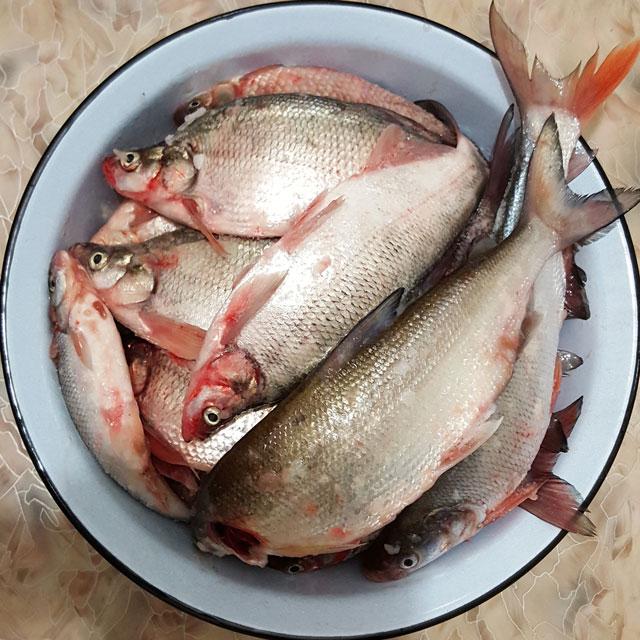 Уклей - зимняя рыбалка