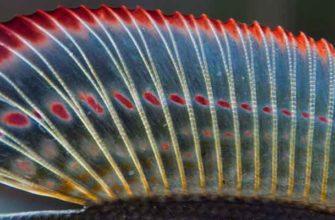 Хариус - рыба моей мечты